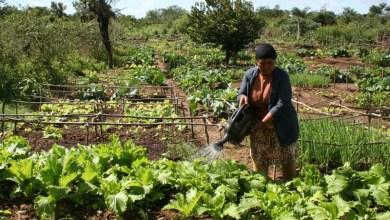 Photo of Chapada: Pagamento do Garantia Safra foi desbloqueado para 95 agricultores de Nova Redenção