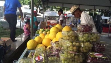 Photo of Salvador: Produtos naturais e orgânicos ocupam Feira Estadual da Reforma Agrária do MST