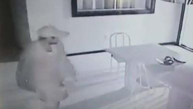Photo of Chapada: Homem é filmado furtando residência em bairro de Jacobina; veja vídeo