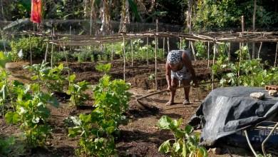 Photo of #Bahia: Garantia Safra destina mais R$ 130 milhões aos agricultores familiares