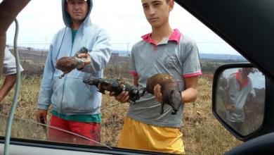 Photo of #Fotos: Animais são mortos pelo fogo na Chapada Diamantina; monitoramento e combate continuam