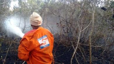 Photo of Chapada: Focos de incêndio diminuem intensidade após combates de brigadistas