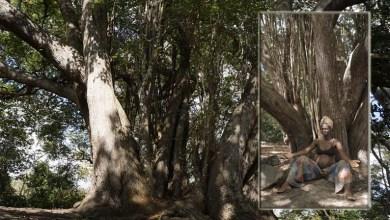 Photo of Chapada: Projeto de vivência sobre o 'Sagrado Feminino' acontece no Vale do Capão