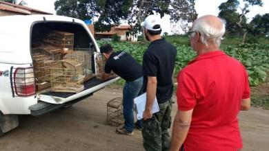 Photo of #Bahia: Animais silvestres são resgatados em ação do MP na Bacia do Rio Paraguaçu