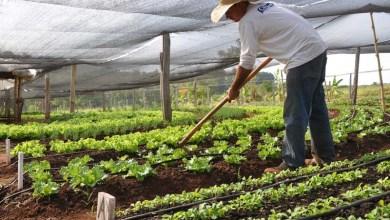 Photo of Edital de Alianças Produtivas Territoriais contempla 52 empreendimentos da agricultura familiar