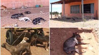 Photo of #Bahia: MP entra com representação contra maus tratos de animais em Livramento de Nossa Senhora