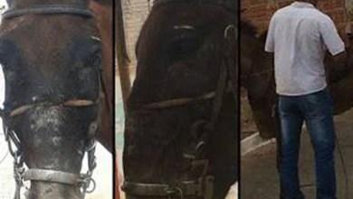 Photo of Chapada: Homem é flagrado maltratando cavalo em distrito do município de Jacobina