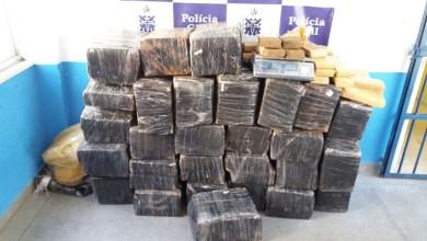 Photo of #Bahia: DTE de Feira de Santana apreende 700 kg de maconha avaliados em R$ 300 mil