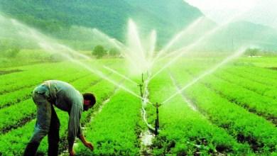 Photo of Câmara aprova projeto que altera período de desconto na conta de energia de irrigantes e aquicultores