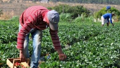 Photo of Chapada: Agricultores dos municípios de Lajedinho e Mucugê recebem o garantia-safra este mês