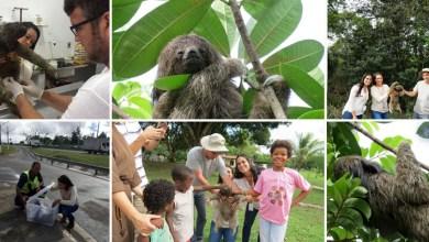 Photo of #Fotos: Bicho-preguiça é resgatado na BR-324, passa por exames e é devolvido ao habitat natural