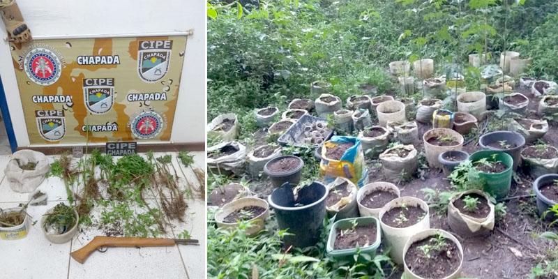 Chapada: Policiais da Cipe erradicam plantação de maconha no Vale do Capão
