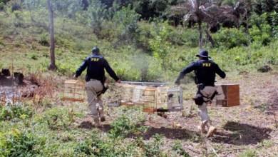 Photo of Chapada: Animais silvestres são apreendidos durante fiscalização em municípios da região