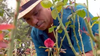Photo of Chapada: Pequenos agricultores de Morro do Chapéu investem no cultivo de flores como saída para crise