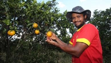 Photo of #Bahia: Município de Rio Real tem metade da população envolvida na produção de laranja