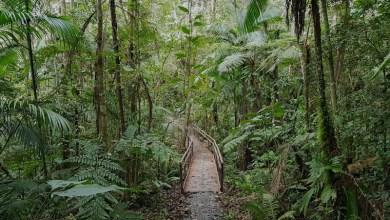 Photo of Chapada: Curso de trilhas sustentáveis é realizado em Ibicoara entre 16 e 20 de outubro