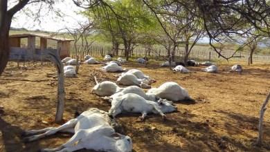 Photo of Chapada: Bovinos morrem misteriosamente em fazenda no município de Tanhaçu