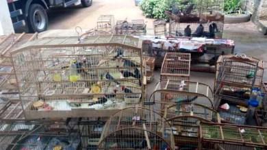 Photo of #Bahia: Mais de 550 animais silvestres são resgatados durante operação da PRF em sete cidades do oeste