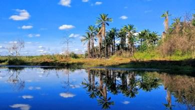 Photo of #Vídeo: Mini-Pantanal do Marimbus é mais um dos locais extraordinários da Chapada Diamantina