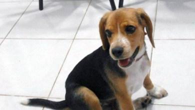 Photo of #Brasil: Cadela morre por conta das altas temperaturas registradas no Rio de Janeiro
