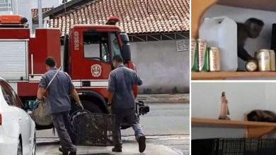 Photo of #Vídeos: Macaco é capturado após invadir loja de conveniência e beber cerveja em São Paulo