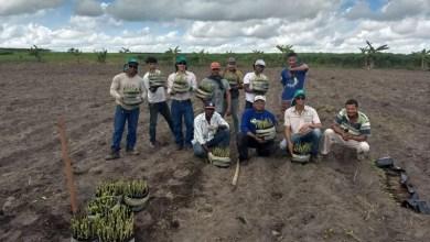 Photo of Governo da Bahia distribuiu mudas a agricultores familiares em 101 municípios