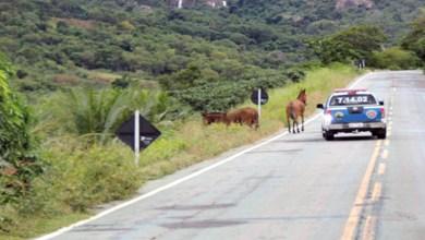 Photo of Chapada: Cavalos soltos são flagrados em trecho da BA-148 na região de Rio de Contas