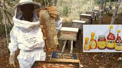 Photo of Chapada: Boa produtividade gera redução de preço do mel produzido no Vale do Capão