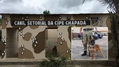 Photo of Chapada: Canil Setorial da Cipe será inaugurado no município de Ruy Barbosa no dia 3 de abril