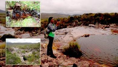 Photo of Atividade de fungos na Chapada Diamantina é tema de defesa de dissertação de mestrado na Ufba