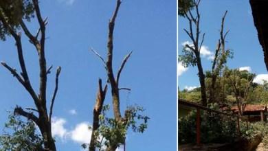 Photo of Chapada: Apesar de necessária, poda em árvores de escola em Lençóis causa repercussão