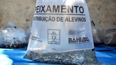Photo of Chapada: Prefeitura de Itaberaba distribui alevinos de carpa, tilápia e tambaqui