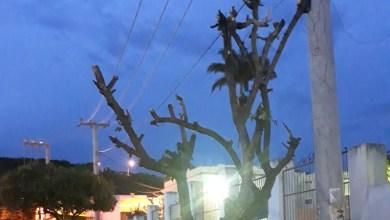 Photo of Chapada: Moradores contestam 'podas drásticas' em árvores realizadas pela prefeitura de Palmeiras