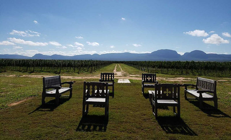 Chapada: Mucugê recebe vinícola de R$50 milhões no segundo semestre de 2020
