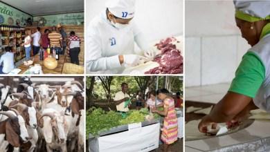 Photo of Agricultura familiar gera renda, movimenta economia e possibilita permanência de famílias no campo