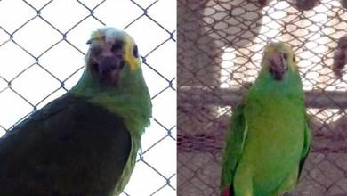 Photo of Papagaio baleado, mordido por cobra e roubado é batizado de 'Freddy Krueger' e retorna sozinho a zoológico