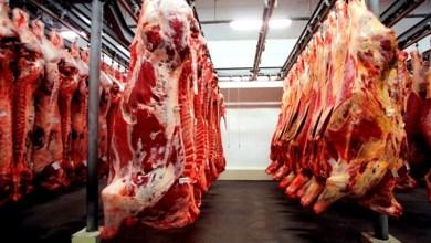 Photo of Exportação de carne bovina para China é suspensa após caso de 'vaca louca' no Mato Grosso