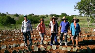 Photo of #Vídeo: Globo Rural mostra projeto que atua com produtores de Baixa Grande, Pintadas e Ipirá