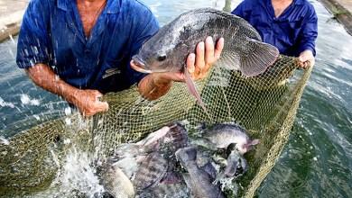 Photo of Chapada: Projeto de piscicultura em Andaraí pode ser interrompido por falta de pagamento de terreno arrendado