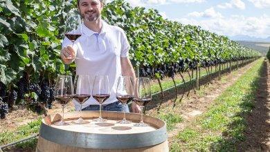 Photo of Produtores de vinho da Chapada Diamantina se destacam com produtos de qualidade; R$50 milhões foram investidos