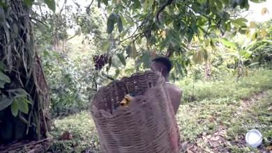 Photo of #Bahia: Reportagem acompanha fiscalização de trabalho escravo em fazendas de cacau