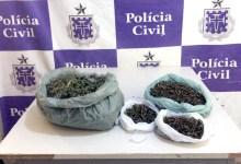Photo of #Bahia: Policiais apreendem quase dois quilos de maconha durante ação em Juazeiro