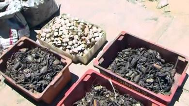 Photo of #Tragédia: Peixeiros jogam produtos encalhados no lixo após desastre ambiental