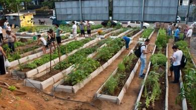 Photo of Chapada: Projeto quer transformar espaços públicos de Itaberaba em hortas produtivas