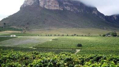 Photo of Chapada: Agricultores de Mucugê e Ibicoara buscam inovações para elevar qualidade e quantidade de suas produções
