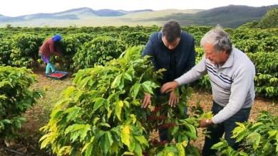 Photo of Chapada Diamantina é uma das microrregiões que será mapeada para validação de lavouras de café