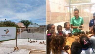 Photo of Chapada: Viveiro-escola inaugurado em Ourolândia após acordo com MP vai produzir 200 mil mudas de árvores