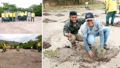 Photo of Chapada: Comunidade em Nova Redenção recebe mais de 500 mudas de árvores em projeto de preservação ambiental