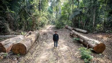 Photo of #Brasil: Terras indígenas têm alta de 74% no desmatamento de 2018 para 2019