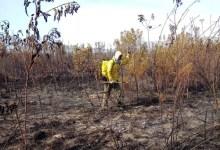 Photo of Chapada: Incêndio em área do Parque Nacional na região de Mucugê é controlado por brigadistas